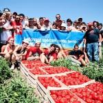 i-pomodori-corleonesi-con-i-volontari